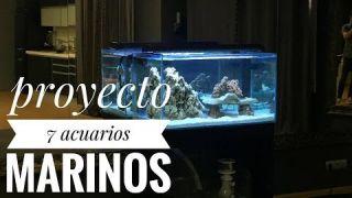 Proyecto 7 acuarios marinos (1)