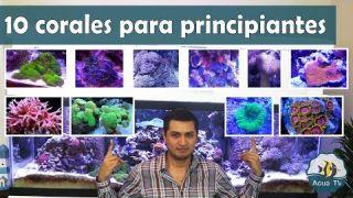 10 Corales para principiantes por AquaTV