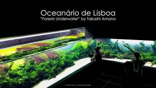 Grand Opening - Forests Underwater by Takashi Amano