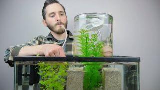 Como expandir el acuario de forma creativa