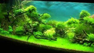 "Aquascape ""Forgotten World 2"""