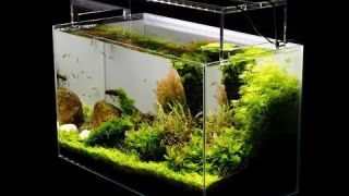 Aquascape Tutorial Guide by James Findley & The Green Machine- Paso a Paso