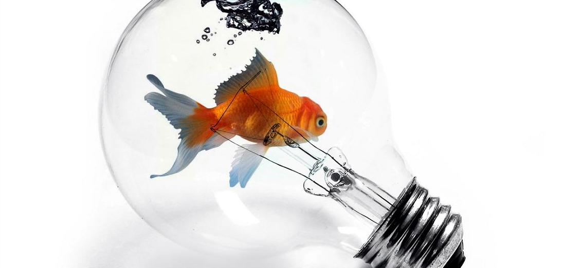 10 Consejos para ahorrar luz en tu acuario.