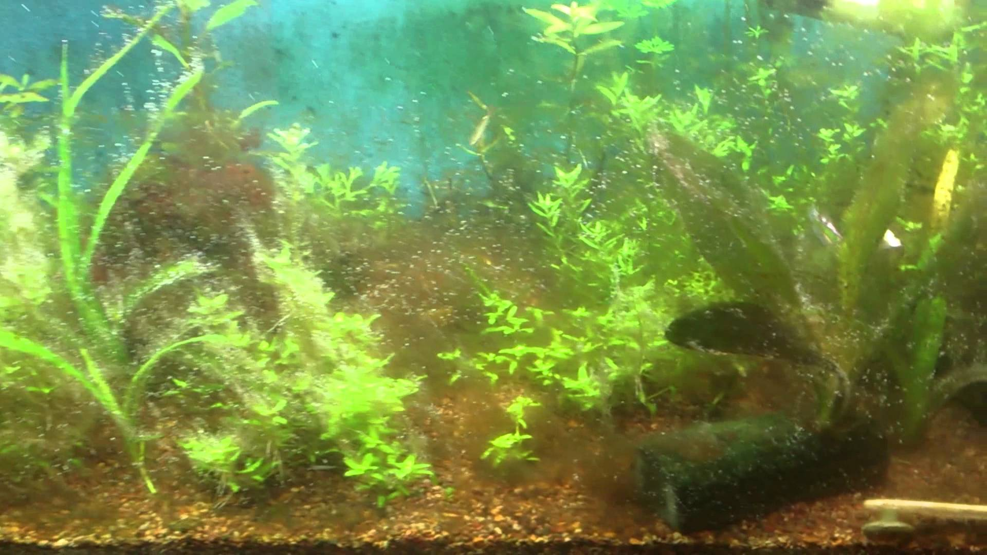 alga cafe