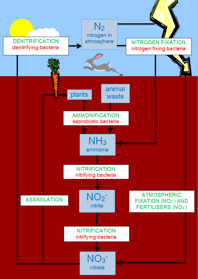 640px The Nitrogen Cycle