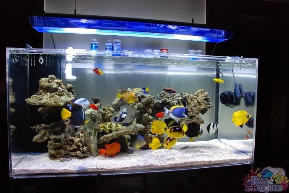 fish3 zpsf38d26f4